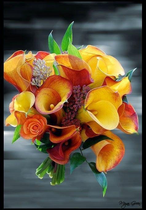 Cadeau de Lovely.foto... Merci Charfy !!!