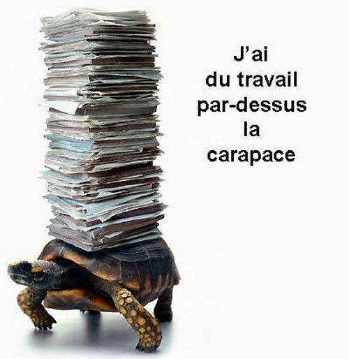 Sacrée tortue...