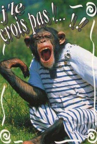 Singes - Petit singe rigolo ...